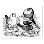 Pigeon Trio Small Poster