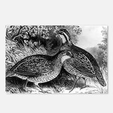 Quail - or Virginia partridge - 1871 Postcards (Pa