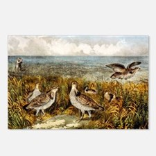 Shooting on the prairie - 1907 Postcards (Package