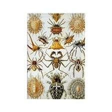 Vintage Spiders Rectangle Magnet
