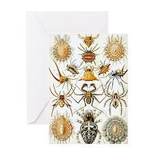 Vintage Spiders Greeting Card