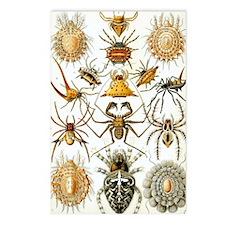 Vintage Spiders Postcards (Package of 8)