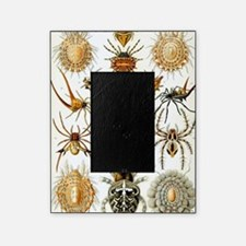 Vintage Spiders Picture Frame