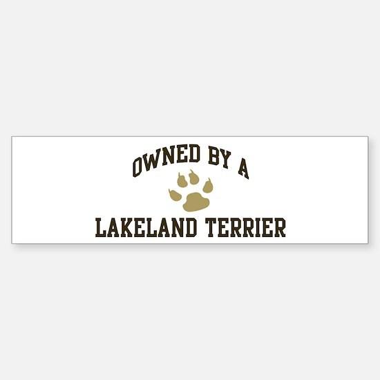 Lakeland Terrier: Owned Bumper Bumper Bumper Sticker