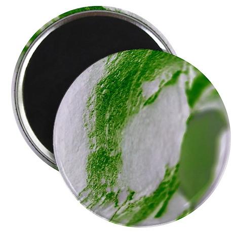 sand, green, white Magnet