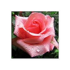 Pink Rose with Dew Sticker