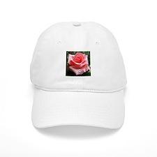 Pink Rose with Dew Baseball Baseball Cap