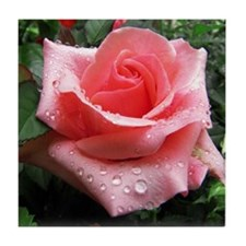 Pink Rose with Dew Tile Coaster
