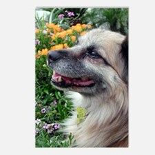 Oscar in the Garden Postcards (Package of 8)