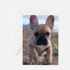 Ava Rouge Greeting Cards (Pk of 10)