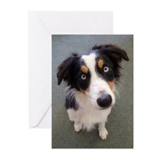 Jetty's Greeting Cards (Pk of 10)