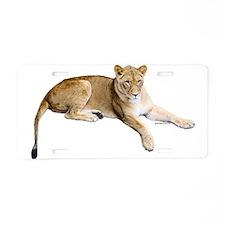 Resting lioness Aluminum License Plate