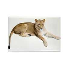 Resting lioness Rectangle Magnet