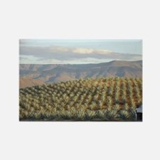 agave hill Rectangle Magnet
