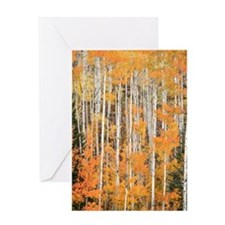 Aspens in Fall Greeting Card