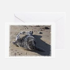 Harbor Seal Pup --  Greeting Cards (Pk of 10)