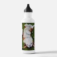 Bliss Water Bottle