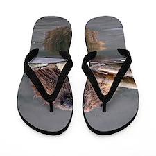 beaver Flip Flops