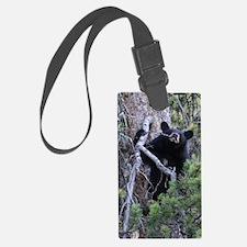 black bear cub Luggage Tag
