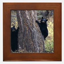 black bear cubs Framed Tile