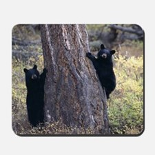 black bear cubs Mousepad