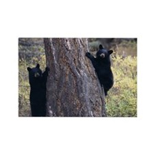 black bear cubs Rectangle Magnet