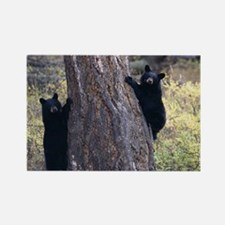 black bear cubs Rectangle Magnet