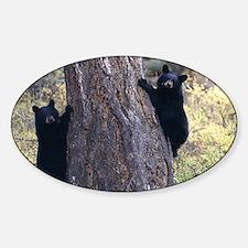 black bear cubs Sticker (Oval)