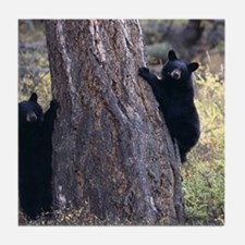 black bear cubs Tile Coaster