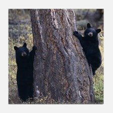 black bear cubs Tile Coaster