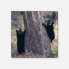 "black bear cubs Square Sticker 3"" x 3"""