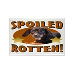 Spoiled Rotten Dachshund Rectangle Magnet (10 pack