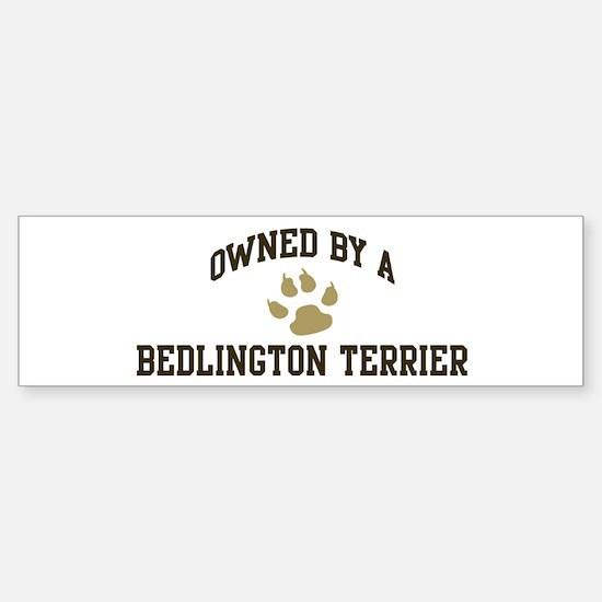 Bedlington Terrier: Owned Bumper Bumper Bumper Sticker