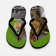 chipmunk Flip Flops