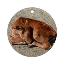baby cow Round Ornament