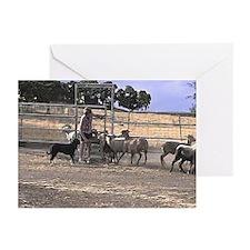 Herding Greeting Cards (Pk of 10)