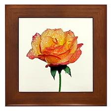 Blushing Rose Nature Photo 2 Framed Tile