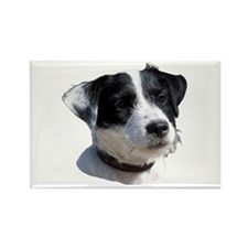 """""""Jackrussell 2"""" Rectangle Magnet (100 pack)"""