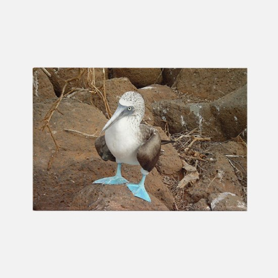 Blue-footed Booby Magnets
