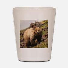 bear Shot Glass