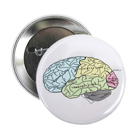 "dr brain lrg 2.25"" Button"