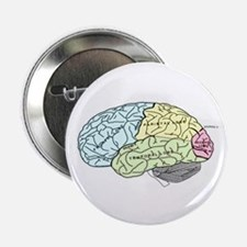 "dr brain lrg 2.25"" Button"