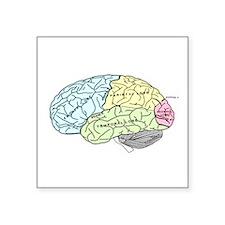 dr brain lrg Sticker