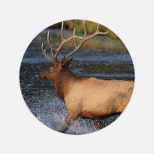 "elk splashing in the water 3.5"" Button"