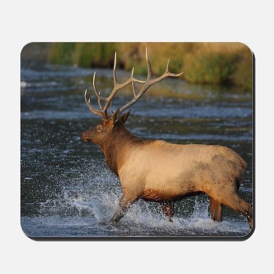 elk splashing in the water Mousepad