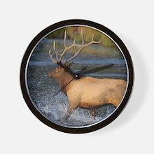 elk splashing in the water Wall Clock