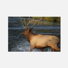 elk splashing in the water Rectangle Magnet