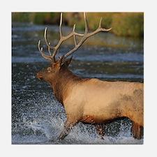 elk splashing in the water Tile Coaster