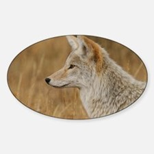 Coyote Portrait Decal