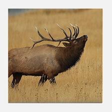 Bull Elk with Head Back Tile Coaster